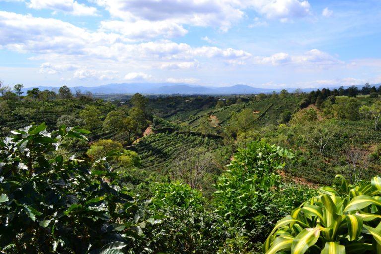 плантации в колумбии